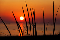 Beach Grass Silhouette