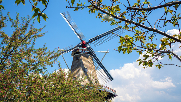 Windmill at Windmill Island in Springtime