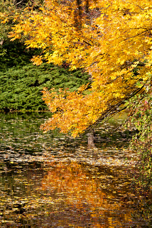 Dow Gardens in Autumn - Midland Michigan