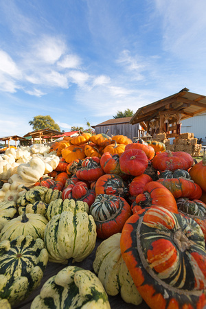 Pumpkins and Gourds for Sale on a Farm Wagon