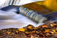 Liquid Gold & Autumn Leaves - Bond Falls